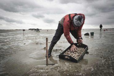 Pêcheur de coques