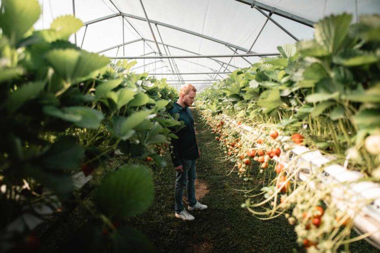 Comme une envie de fraises pour son habiller son homard - © Antidote Factory - Photographie Aude Bocage & Thomas Texier