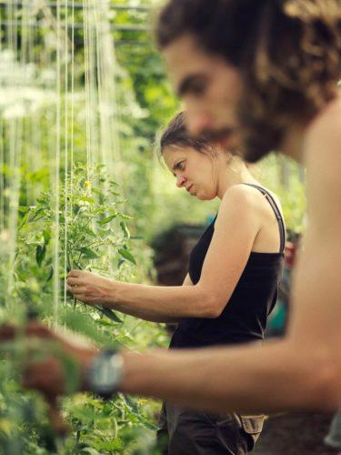 À la ferme, chacun est affairé à une tâche qui lui a été assignée en fonction de ses affinités et de ses compétences - © 180°C - Photographie Guillaume Czerw