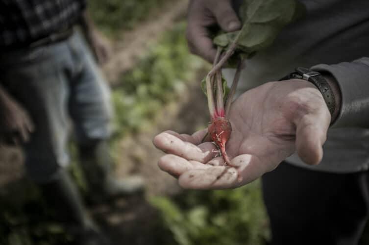 Un mini navet qu'on pourrait presque confondre avec un radis - © 180°C - Photographie Olivier Pascuito