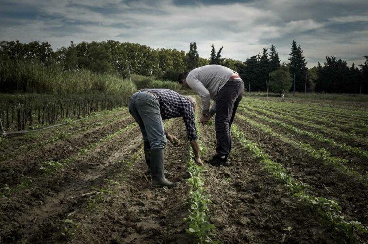 Le chef et le paysan grattant la terre pour observer le résultat de leurs expériences - © 180°C - Photographie Olivier Pascuito