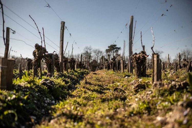 Dans les années 2000, le domaine évolue vers une viticulture durable, propre, respectueuse, engagement concrétisé par la certification en bio puis en biodynamie - © Viamo - Photographie Antonin Bonnet