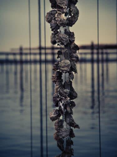 Sur une table, Florent a l'idée d'installer un moteur qui relève une centaine de cordes à la fois et à raison d'une centaine d'huîtres par corde - © 180° - Photographie Éric Fénot
