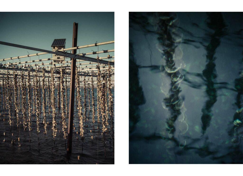 Les huîtres de l'étang de Thau :<br/> Tarbouriech ou la vie en rose