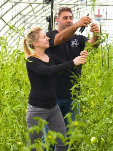 Connie Zagora dans une serre de tomates bio