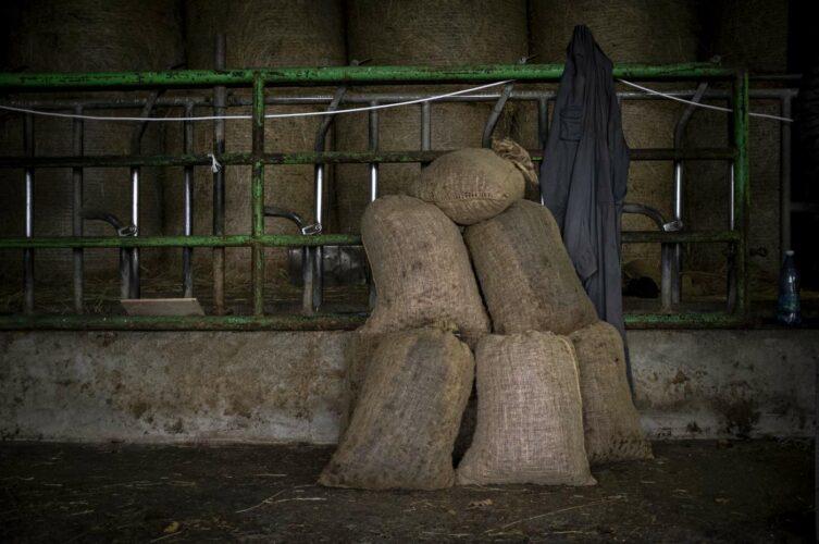Sacs de châtaignes qui auront au préalable été lavées puis triées - 180°C - Photographie Olivier Pascuito