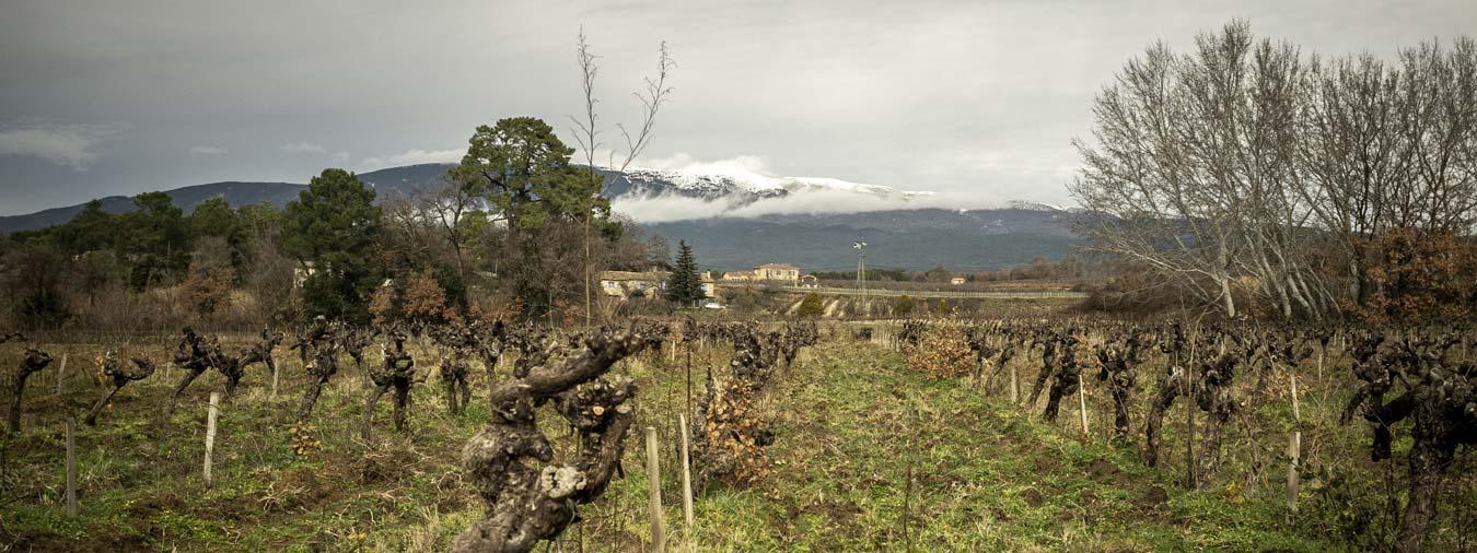 Domaine & Les Chancel: ovni vino du Mont-Ventoux