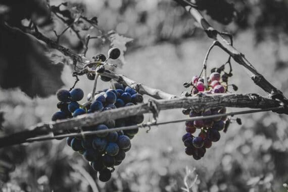 raisins de la colère